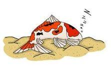 các nguyên nhân gây stress cho cá koi
