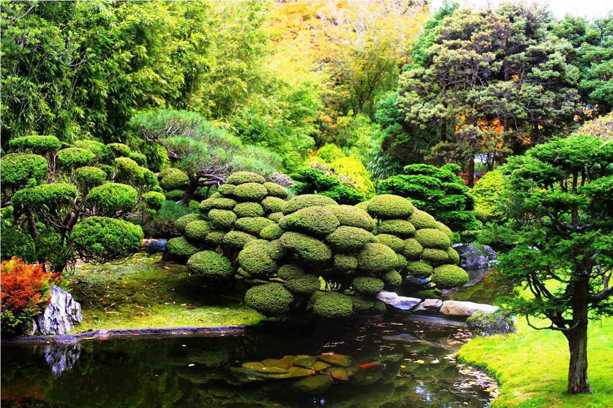 H koi truy n th ng nh t b n for Japanese pond design