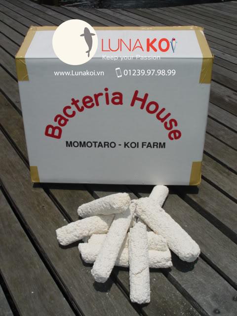 chuyên bán momotaro bacteria house