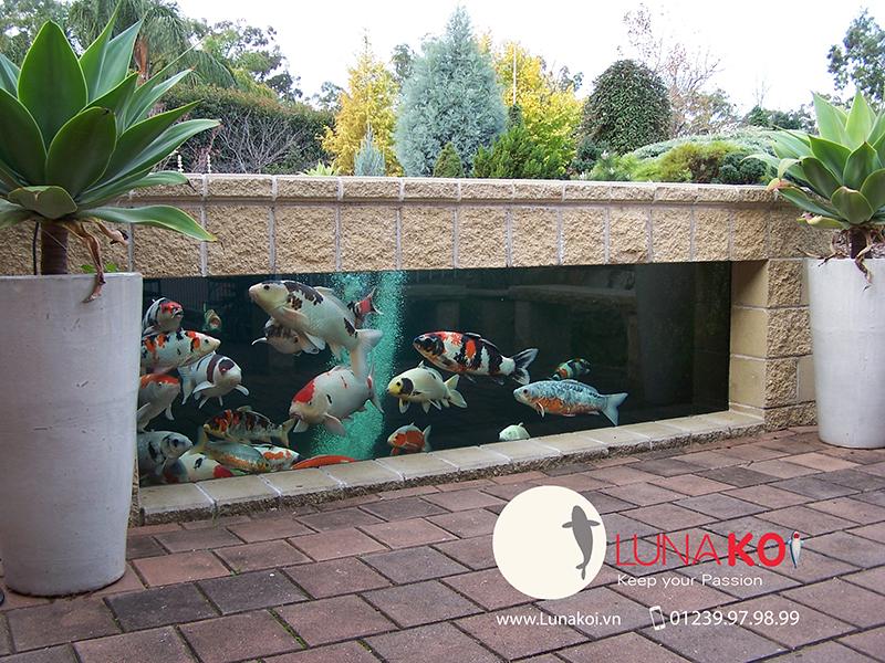Thiết kế & Xây dựng hồ cá Koi - 4