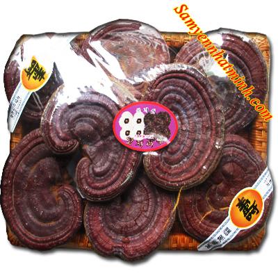 Thực Phẩm Chức Năng : Nấm Linh Chi Đỏ Hàn Quốc (8-10 tai/kg)