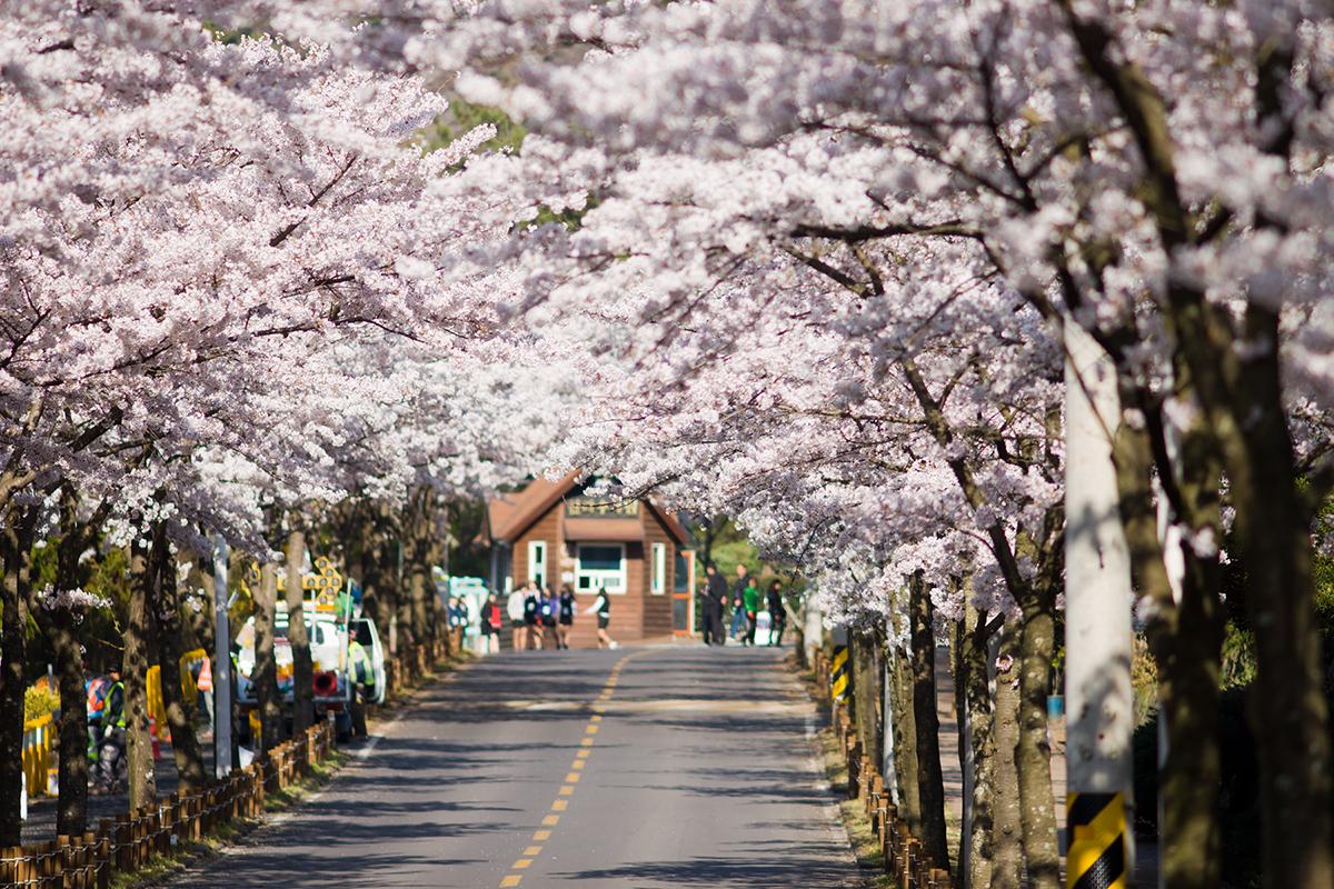 Kết quả hình ảnh cho ảnh đẹp đảo nami Hàn Quốc