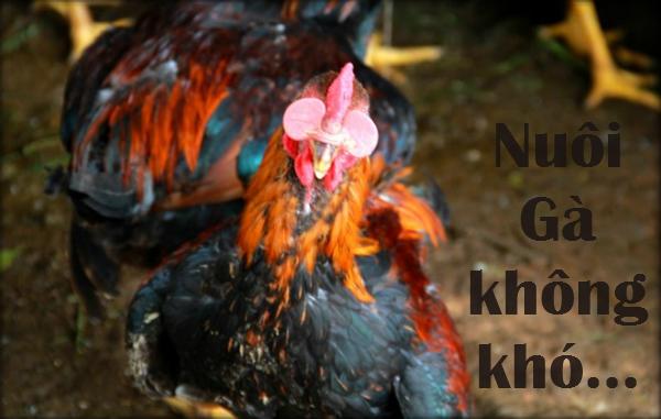 cách làm chuồng để nuôi gà