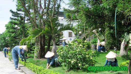 Dịch vụ chăm sóc cây cảnh xanh đẹp tại nhà Hà Nội