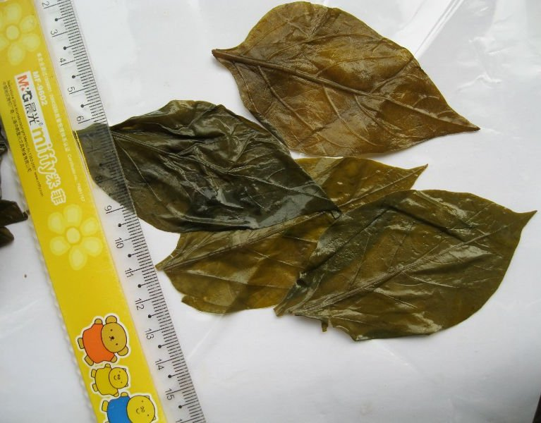 Salted chili leaves