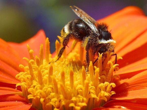 phấn hoa