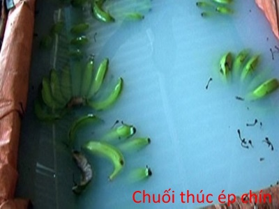 Chuoi