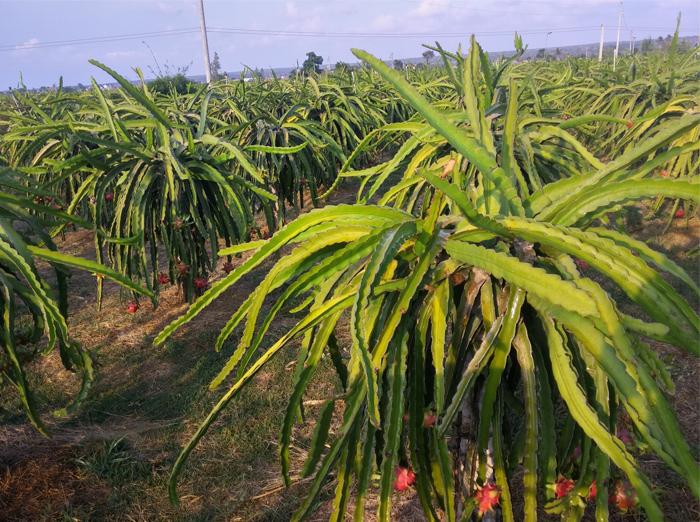 trái cây sấy khô 02