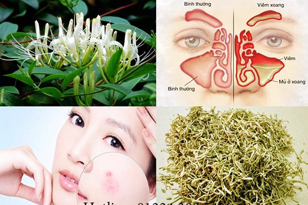 Chăm sóc sức khoẻ: Tác dụng Hoa kim ngân Kim-ngan-hoa-111