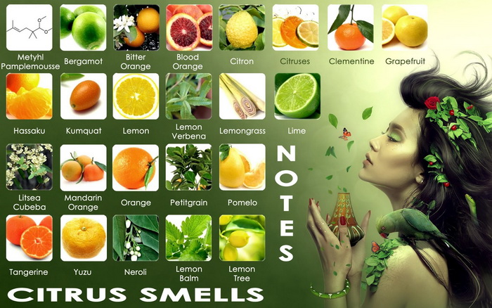 Nước hoa hương cam quýt trong 12 cung Hoàng đạo