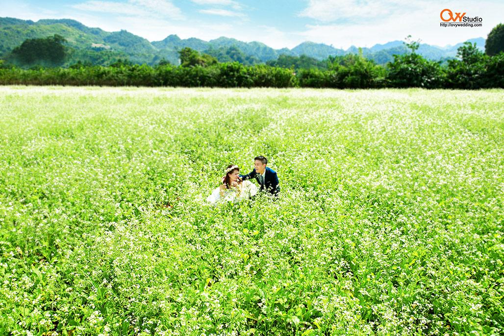 Chụp ảnh cưới Mộc châu với đồng cải