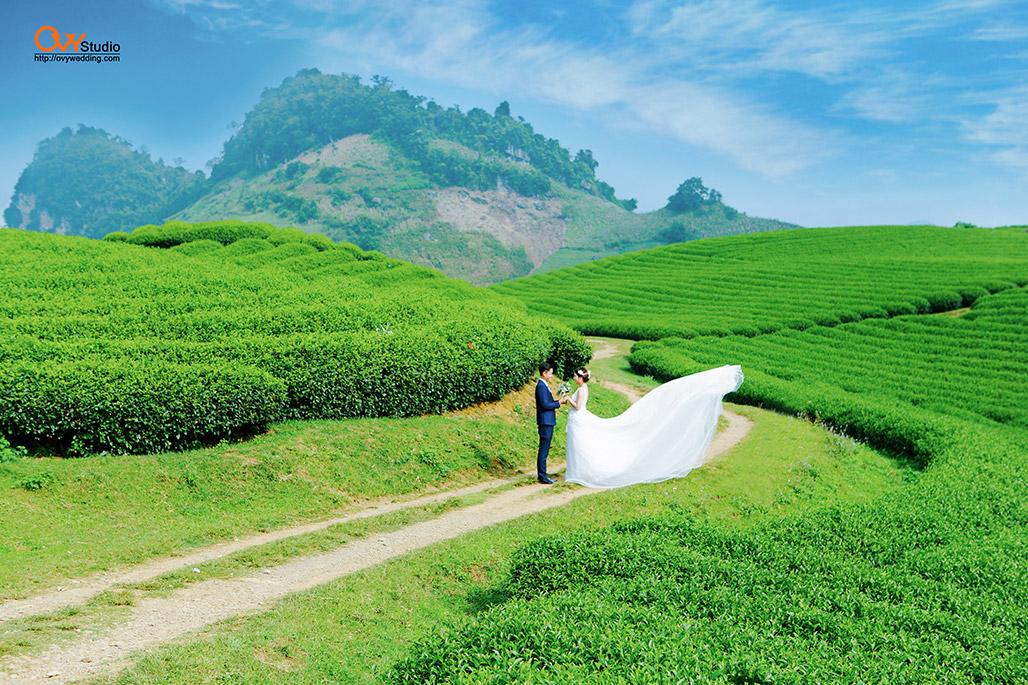 Chụp ảnh cưới ở Mộc Châu - Đồi chè