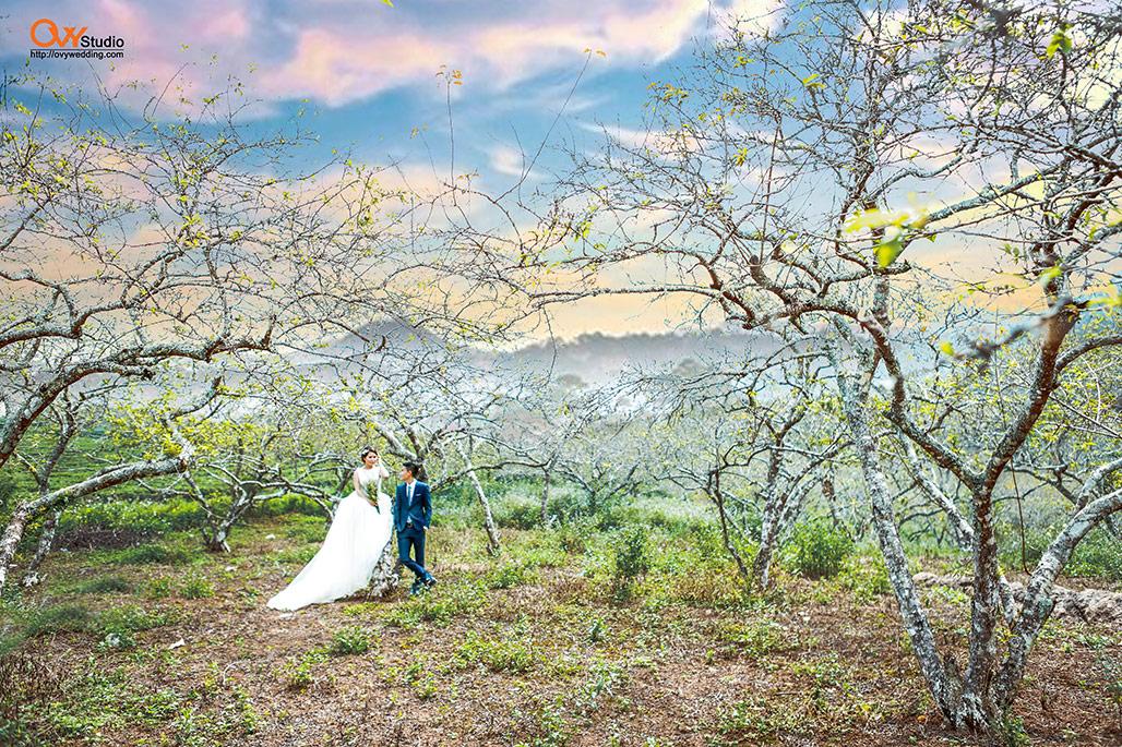 Chụp ảnh cưới ở Mộc Châu với những mùa hoa đẹp như mơ