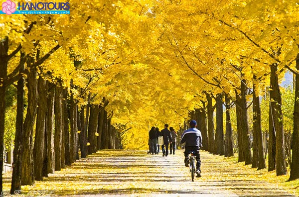 Mùa thu lá vàng tại Hàn Quố