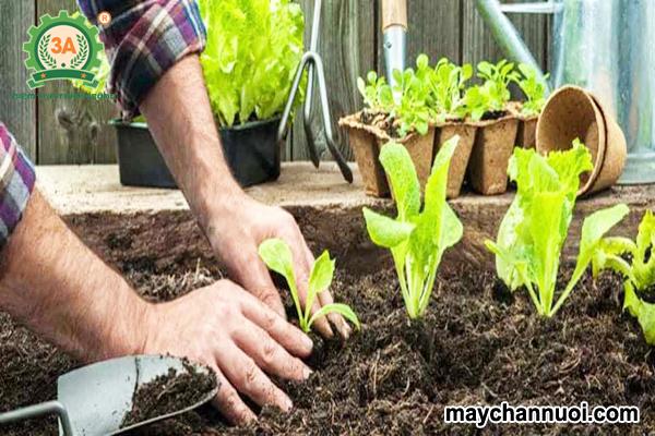phân hữu cơ vi sinh bón cho rau