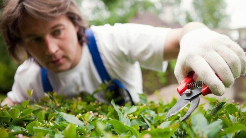 Hướng dẫn chăm sóc cây xanh trong vườn luôn tươi tốt