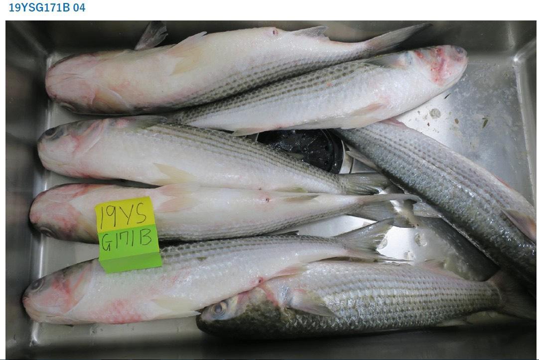 """Diễn đàn rao vặt: Đặc sản biển Quỳnh sẵn sàng """"hạ gục"""" bất kỳ thực khách nào 275c589f8f71682f3160-1"""