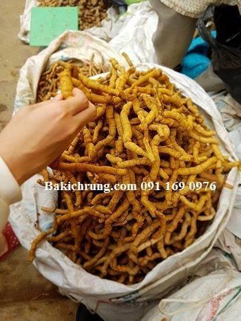Xu hướng kinh doanh Ba Kích Quảng Ninh - Bakichrung.com
