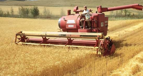 РФ и Вьетнам проведут совместную работу по обеспечению фитосанитарной безопасности при поставках российского зерна