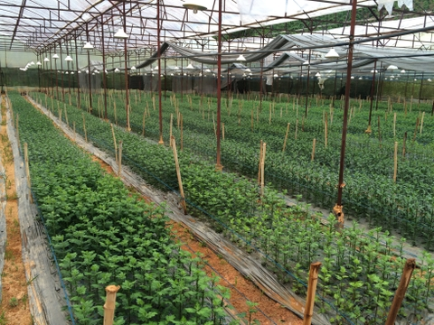 Agriculture - PAN Saladbowl's farms in Da Lat