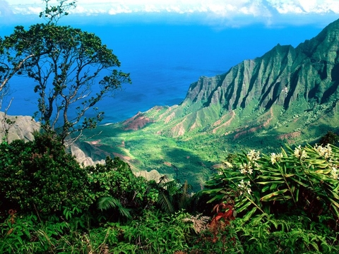 Hawaii Special Tour (5 days 4 nights)