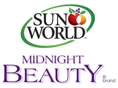 SunWorld - Midnight Beauty