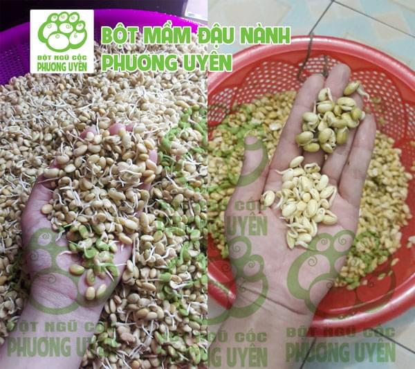 Bột mầm đậu nành