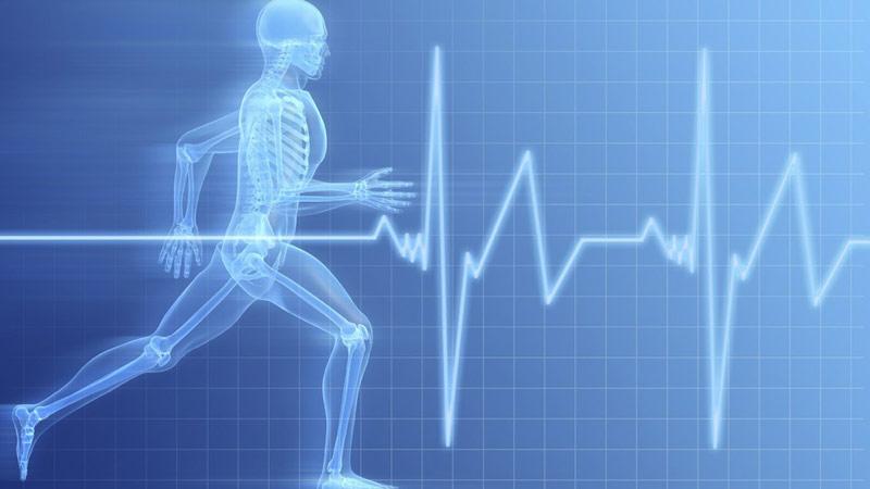 Nhịp tim con người