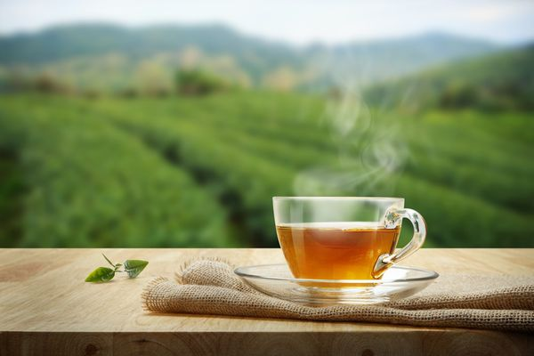 """Khám phá những loại trà đắt nhất thế giới làm giới """"sành trà"""" mê mẩn   Plantrip Cha"""