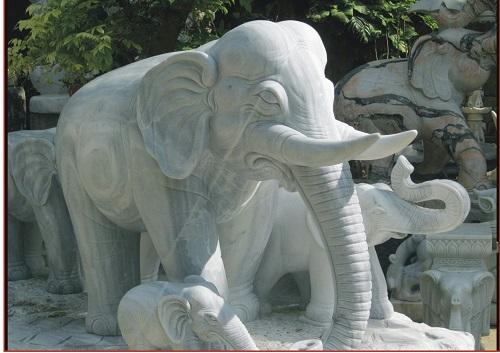 Con voi đá 02