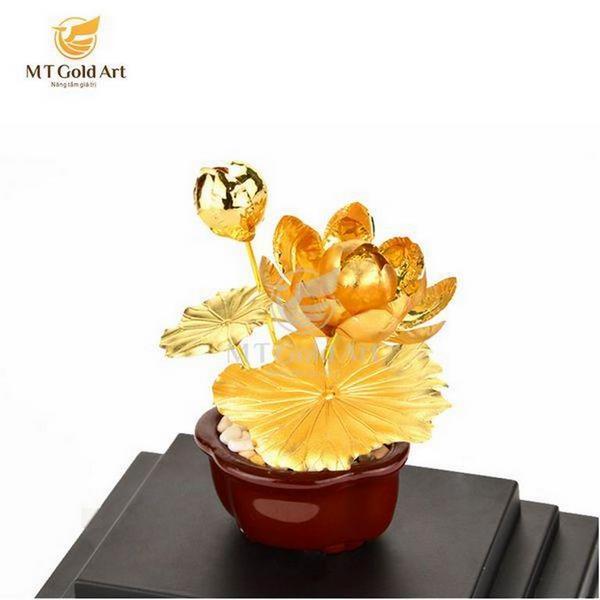 Chậu cây hoa sen vàng lá- quà tặng doanh nghiệp cao cấp 9