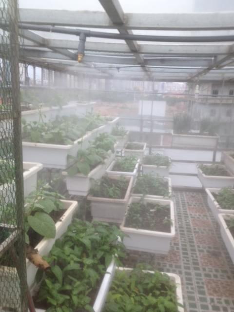 hệ thống tưới rau tự trong nhà kính