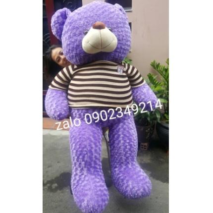 Gấu teddy màu tím xinh 1m7