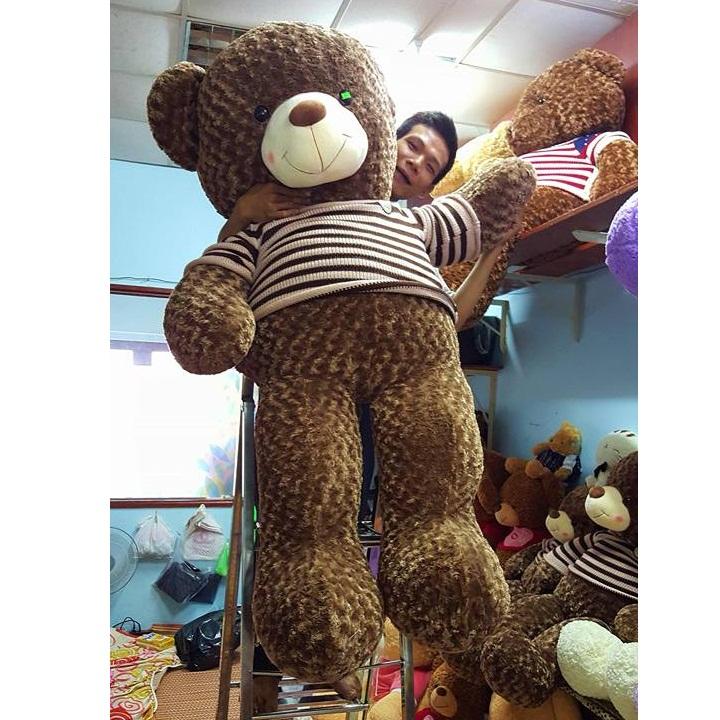 Gấu teddy Choco ngoại nhập cao cấp 04