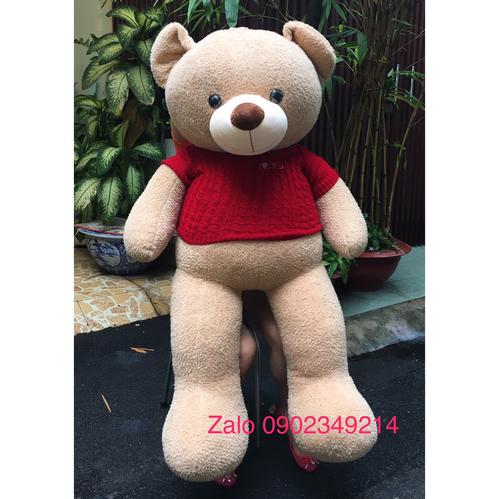 Gấu teddy lông sát Hàn Quốc