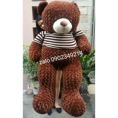 Gấu Teddy lông xoắn nâu 1m8
