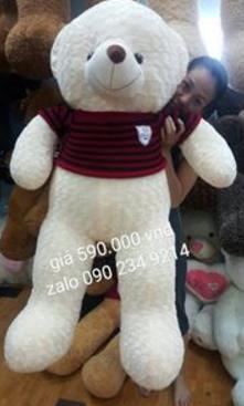 Gấu Teddy 1m5 01