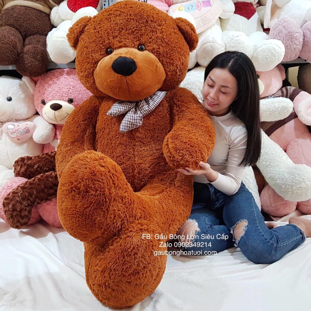 Gấu teddy boys đẹp 2m