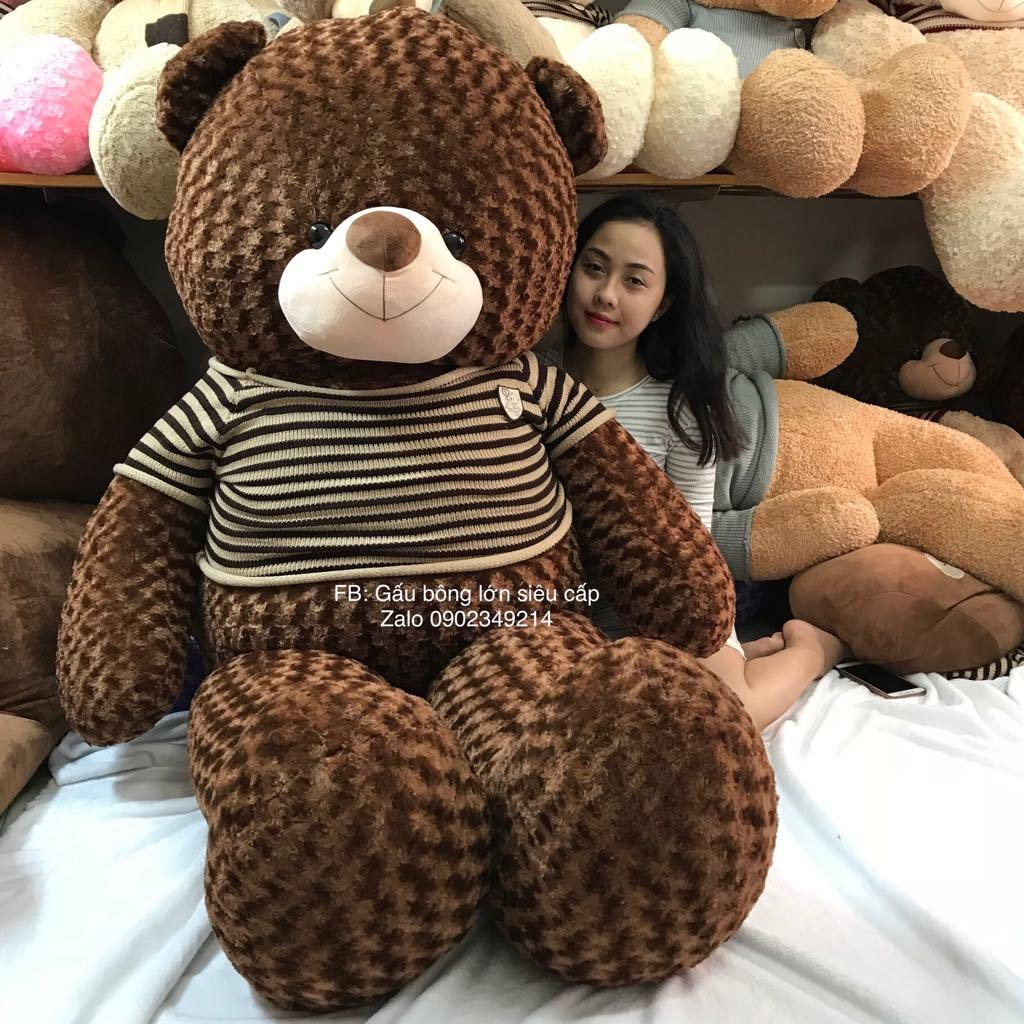Gấu bông teddy socola 2m2