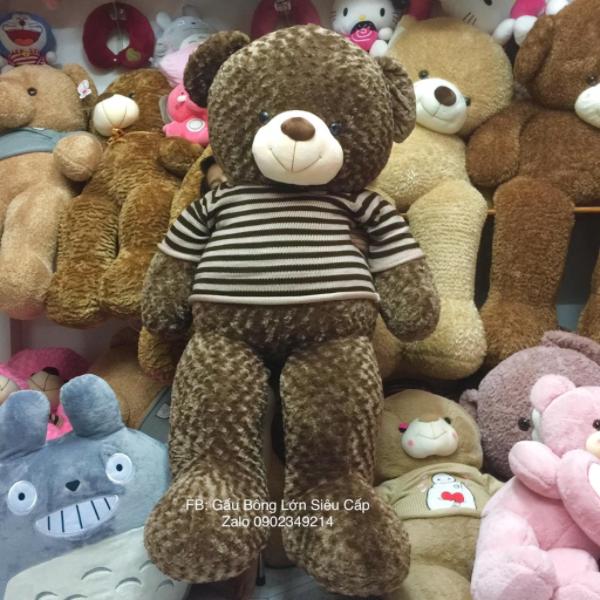 Gấu bông teddy 1m8 lông xoắn