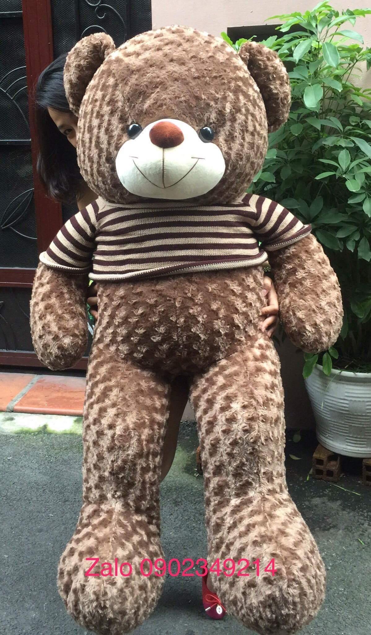 Gia đình Gấu Teddy lông xoắn