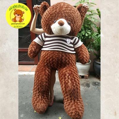 Gấu bông Teddy socola 1m7