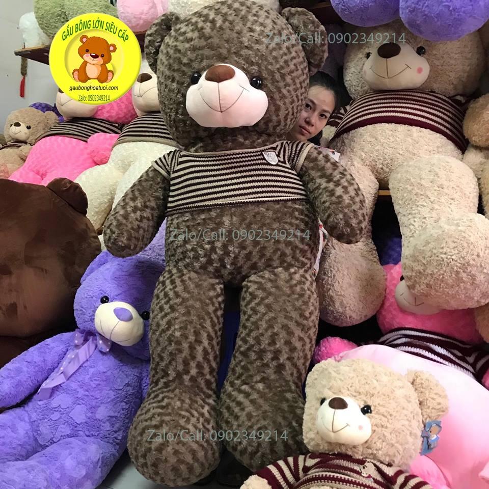 Teddy 1m7
