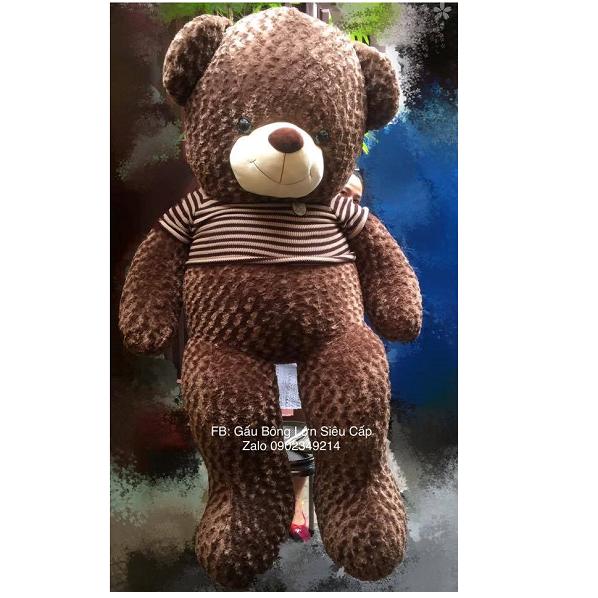 Gấu Teddy Socola lông xoắn hoa hồng 2m2