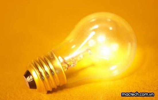 Bóng đèn máy ấp trứng có bao nhiêu loại? Nên dùng loại nào