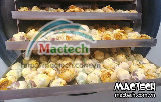 Máy sấy thăng hoa Mactech MST50 sấy tối đa 5kg nguyên liệu