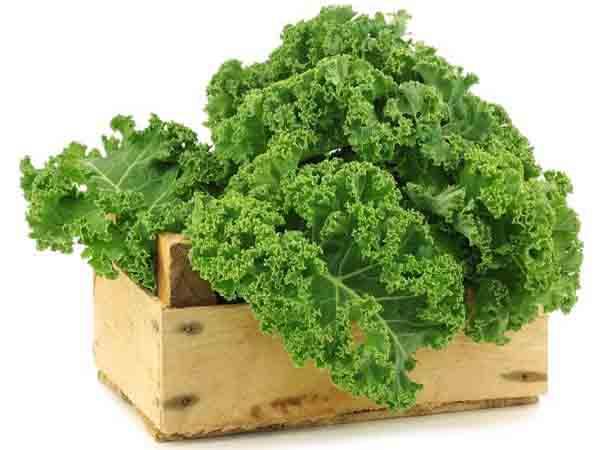 Cải Xoăn - Kale