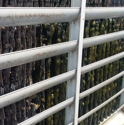 Cooling tower bị rong rêu, nguyên nhân và giải pháp
