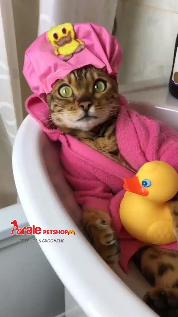 dịch vụ tắm vệ sinh chó mèo