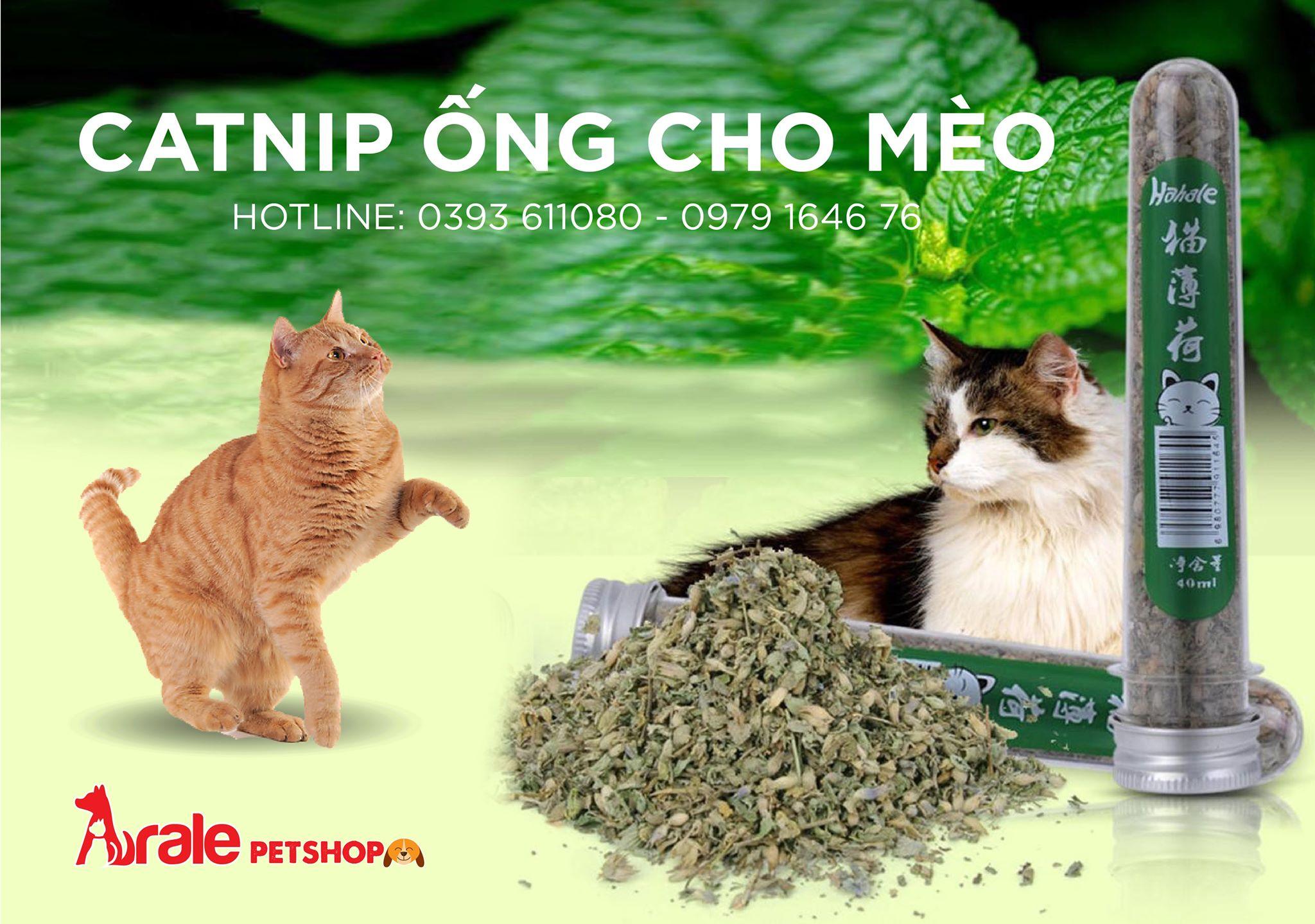 CATNIP ỐNG CHO MÈO 40ML